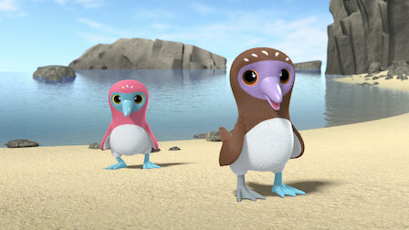 Watch Eating Healthy with the Blue-footed Sula Birds. Episode 13 of Season 1.